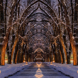 Liberty Park  by Brandon Montrone - Digital Art Places ( digital, mirror, nature, trees, park, landscape )