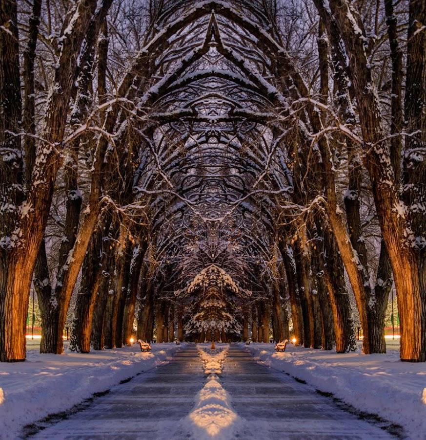 Liberty Park  by Brandon Montrone - Digital Art Places ( digital, mirror, nature, trees, park, landscape )