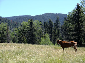 Photo: Horse in a meadow. The owners were camped nearby.