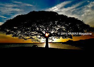Photo: OUTDOORS CATEGORY, FINALIST. Sunset through monkeypod tree, Foster Point Peninsula, Hickam Air Force Base, Oahu. Photo by Kim Reese, Hershey, Pennsylvania.