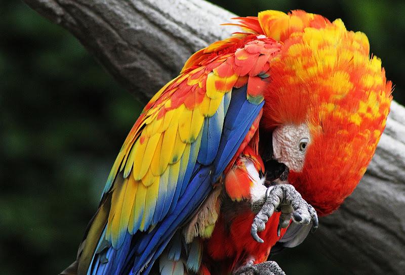 Multicolor di Marlyn