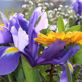 by Carmen Baltianu - Flowers Flower Arangements
