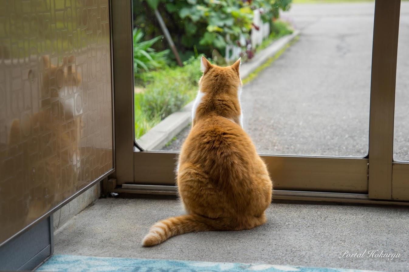 玄関から外を眺めて