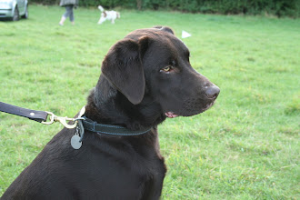 Photo: Another great photo. This time of Monty Labrador. Lovely!