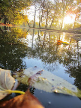 Photo: Fallen leaves and morning sunlight floating on a lake at Eastwood Park in Dayton, Ohio.