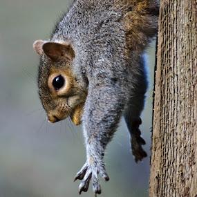 by Teresa Hoyt - Animals Other Mammals