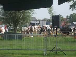 Photo: Op het ernaast gelegen terrein wordt de jongveedag Hoornaar voor kalveren, pinken en vaarzen gehouden.