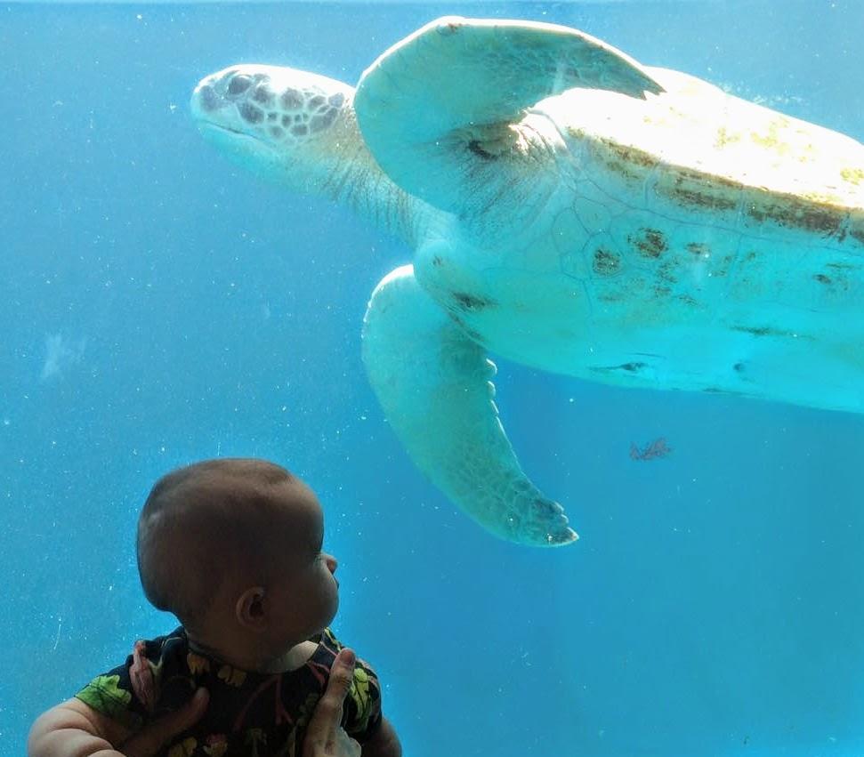 Novo aquário do Projeto Tamar, em Vitória