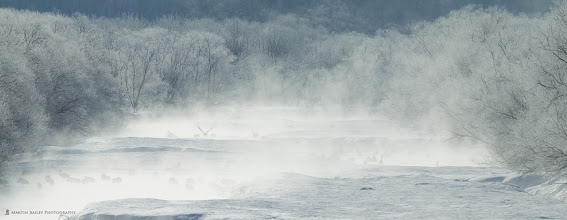 Photo: OK, so here's just one shot for now, going into my Best of Japan Nature album (http://mbp.ac/gpbjn).  The scene is the mist on river and hoar frost on the trees, shot from Otowa Bridge, in Tsurui, Hokkaido. There are around 200 Red-Crowned Cranes roosting in the mist, and one flying on the center of the left third.  But it also matches the #PanoPoker theme: Made with a Long Lens  This is actually a multiframe stitched panorama, shot with a 600mm lens. Hope that's long enough! :-)  Curated by +Barry Blanchard, +Tony Payne and +Mike Spinak.