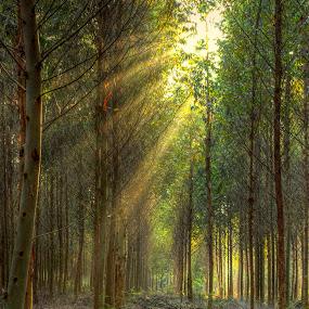 by Roger Fanner - Landscapes Forests