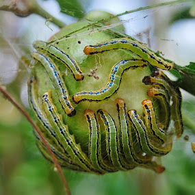 better together by Goddes Puffz - Animals Insects & Spiders ( #insects, #pest #crusher #plant, #caterpillar )