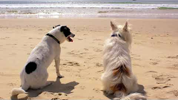 Dogs on a beach (pour francophones)