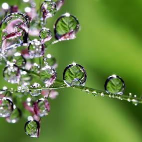 Go GREEN by Ahmad Soedarmawan - Nature Up Close Other plants