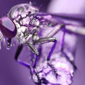 by Nur Kadri - Animals Insects & Spiders