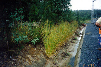 Photo: AUS-RY09 Australia - Railroads in Queensland. Vetiver used to stabilize a small embankment and reduce the amout of sediiments entering drain almost completely