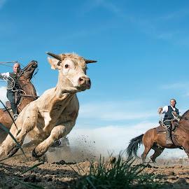 by Mauro Rotisciani - Sports & Fitness Rodeo/Bull Riding ( cowboy, uomini, sky, horses, corda, galoppo, italy, terra )