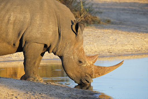 Rhino poachers jailed and fined for Kruger park incursions