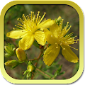 Medicinal Plants of the Free. APK
