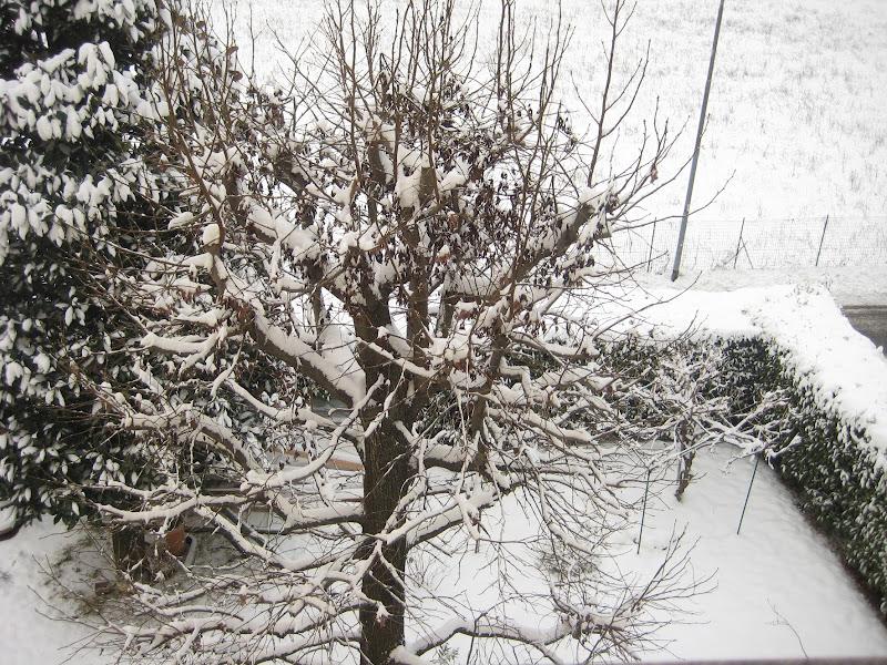 albero bianco di aeglos