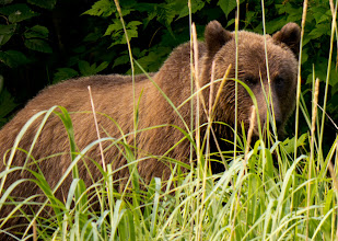 Photo: Hello Mr. Bear!