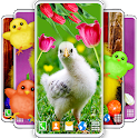 Easter Chicks Live Wallpaper 🐤 4K Wallpapers Free icon