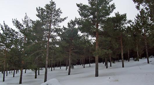Ola de frío: la nieve llegará a puntos de la provincia poco habituales
