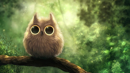 Cute Owl HD Live Wallpaper