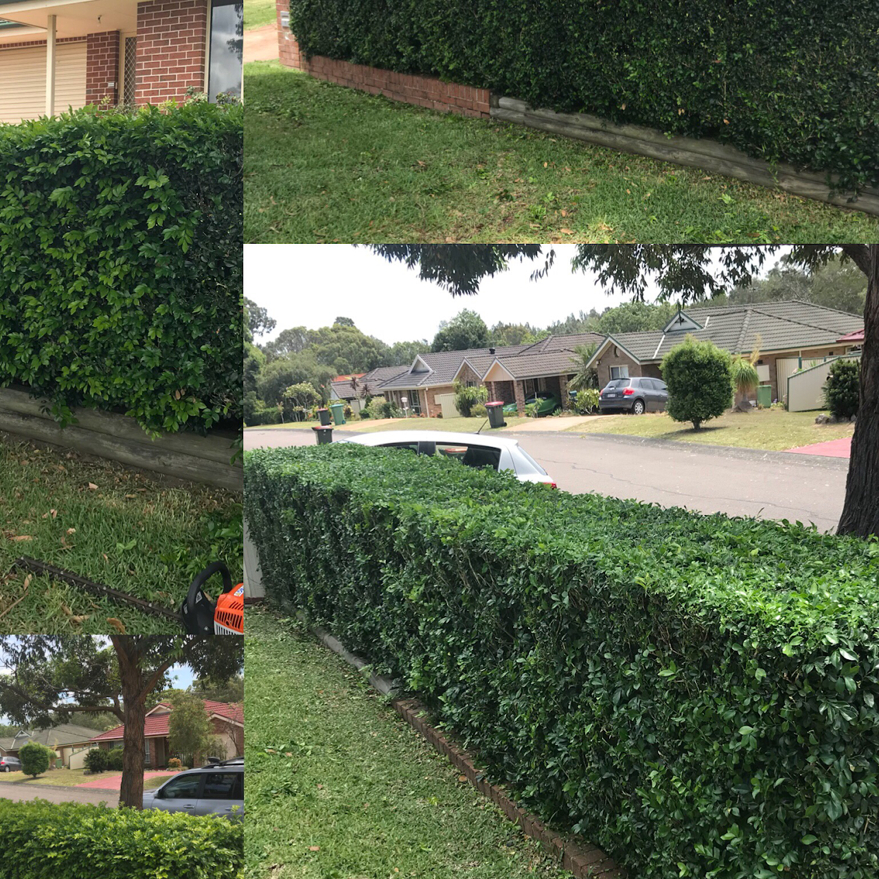 a big day of hedging and gr - Toms Lawn And Garden