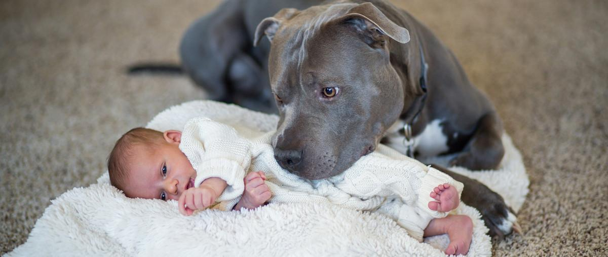 How Writing About Pit Bulls Led to Death Threats, Online and IRL | Literary  Hub