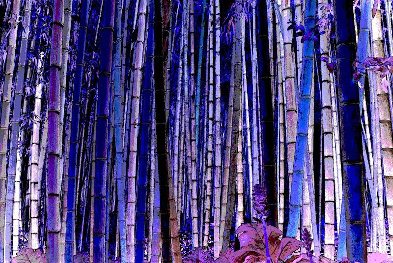 Foresta Blu di climbs