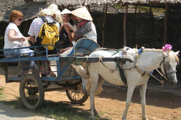 Ox cart ride in Ben Tre