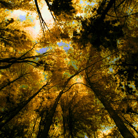 Under Yellow Trees by Agung Cahyono - Landscapes Forests