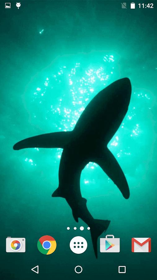 live shark wallpaper - photo #32