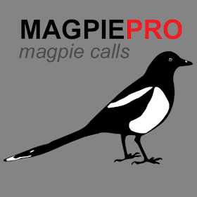Magpie Calls for Hunting