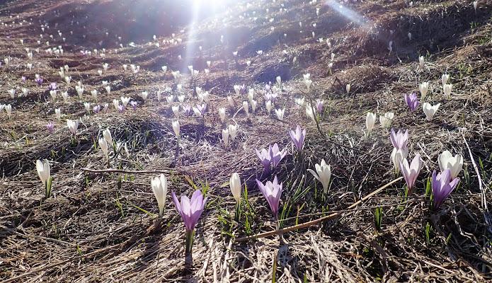 Luce di Primavera
