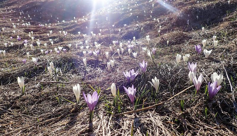 Luce di Primavera di laura62