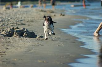 Photo: Böda sand -10