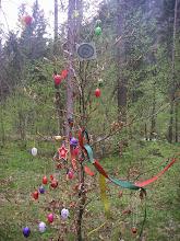 Photo: Schöner bunter Baum