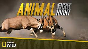 Animal Fight Night thumbnail