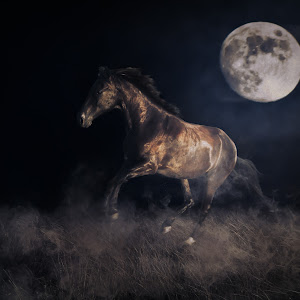 horse moon.jpg