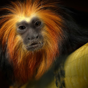 Monkey by Angel Weller - Animals Other