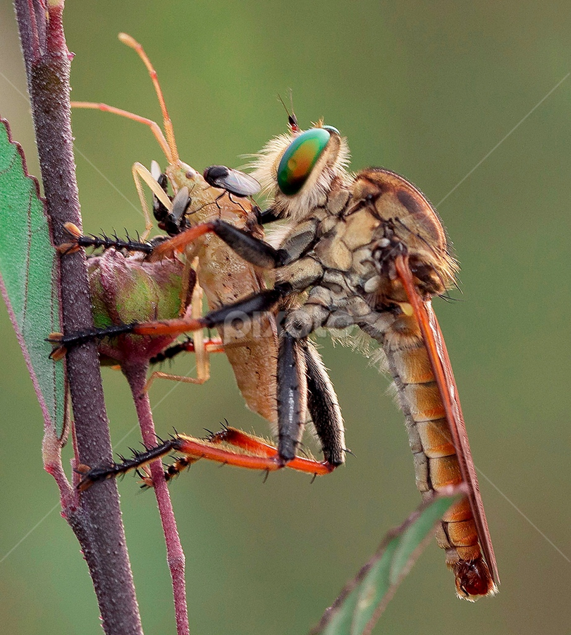 Hhhhmmm...Yummy... by Vincent Sinaga - Animals Insects & Spiders
