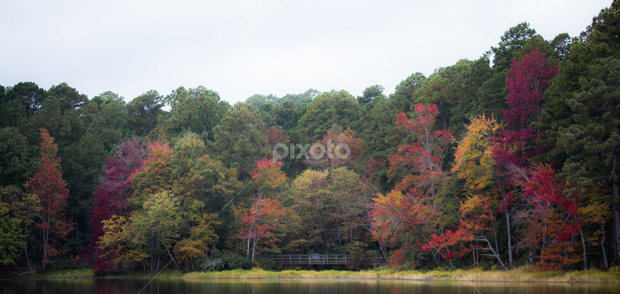 Bridge in autumn by Kevin Hayes - Landscapes Forests ( autumn, colors, fall, bridge, leaves )