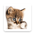 How old is your cat? icon