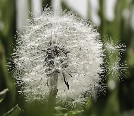 Blowing in the wind di alfonso gagliardi