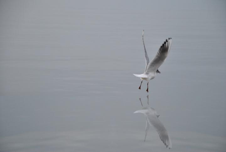 Le ali della libertà di mcvitus