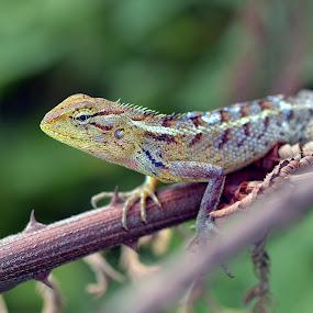 by Piutie Kay - Animals Reptiles