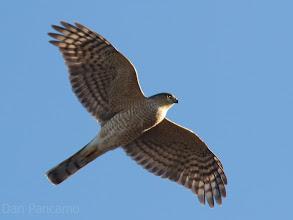 Photo: El Franco Lee Park - Cooper's Hawk