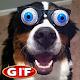 Gifs de Perros Graciosos Download for PC Windows 10/8/7