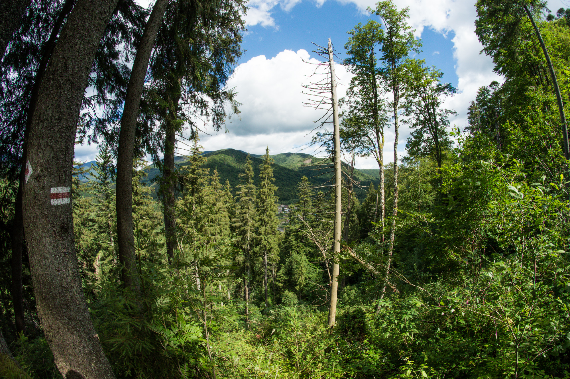 Східно-Карпатський Туристичний Шлях